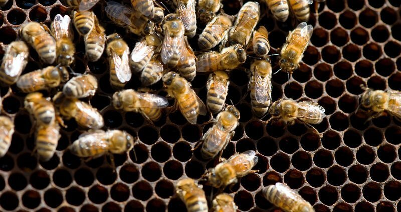 How to Handle a Bee Infestation in Your Roof