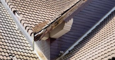 How Well Did Your Roof Survive the Winter?